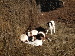These sweet brothers and sisters are keeping plenty warm in the sun this March