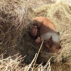 12 Piglets Born 4/11