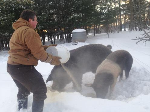 pigs2018